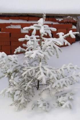 Песня елочке не холодно зимой скачать мп3